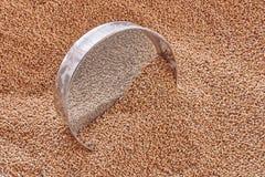 Зерна пшеницы на металлической сетке Взгляд сверху, текстура зерен пшеницы стоковые фотографии rf