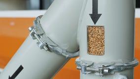 Зерна пшеницы через трубу входят автоматизированную мельницу сток-видео