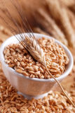 Зерна пшеницы Стоковые Фото