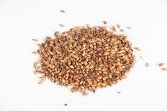 Зерна солода стоковое фото