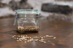 Зерна солода стоковое фото rf