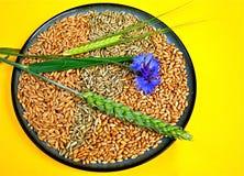 зерна ушей Стоковые Фото