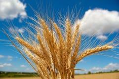 зерна хлопьев солнечные Стоковое фото RF