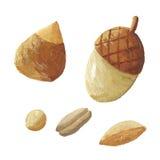 зерна nuts бесплатная иллюстрация