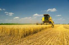 Зернокомбайн жатки жать пшеницу Стоковые Фото