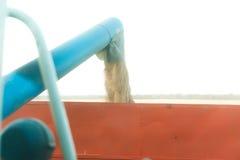 Зернокомбайн жать поле Стоковая Фотография RF