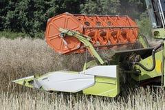 Зернокомбайн жать рапс Стоковое Изображение RF
