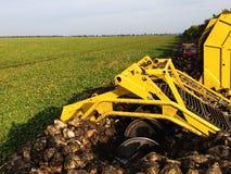 Зернокомбайн жать сахарные свеклы стоковое изображение
