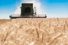 зернокомбайн пшеницу Стоковые Фотографии RF
