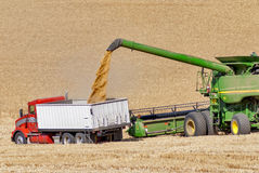 Зернокомбайн разгржает пшеницу в тележку зерна стоковые изображения