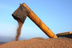 Зернокомбайн разгржая зерно Стоковая Фотография RF
