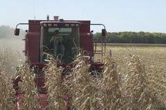 Зернокомбайн Harvestor operating женщины стоковые изображения rf