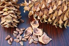 Зерно гайки сосенки Стоковые Фотографии RF