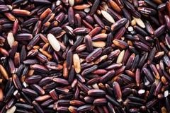 Зерно покрашено фиолетовый к белизне стоковое изображение