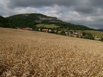 зерно поля золотистое Стоковое фото RF