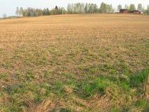 зерно поля Стоковое фото RF