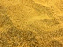 Зерно пшена Стоковая Фотография