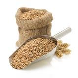 Зерно пшеницы на белизне Стоковые Фотографии RF