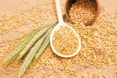 Зерно пшеницы на конце холста вверх Стоковое фото RF