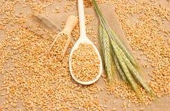 Зерно пшеницы на конце холста вверх Стоковые Фото