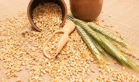 Зерно пшеницы на конце холста вверх Стоковое Изображение