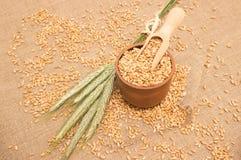 Зерно пшеницы на конце холста вверх Стоковые Изображения
