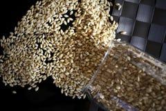 Зерно пшеницы на черноте Стоковые Изображения
