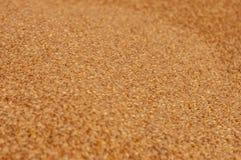 Зерно пшеницы Стоковая Фотография RF