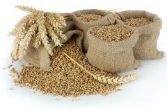 Зерно пшеницы стоковые фотографии rf