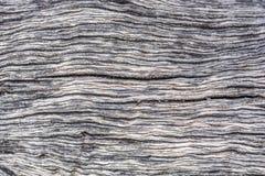 Зерно старого оливкового дерева стоковые изображения rf