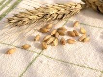 зерно уха Стоковая Фотография RF