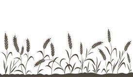 зерно ушей Стоковые Изображения RF