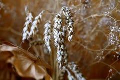 зерно хлеба Стоковое Изображение RF
