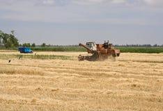 Зерно чистки Стоковая Фотография RF