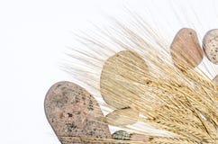 Зерно ячменя с камнями Стоковые Изображения