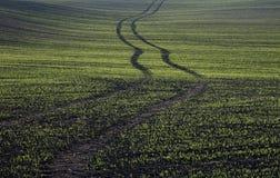 зерно Стоковая Фотография