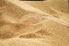 зерно стоковое фото