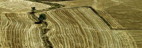 зерно Стоковые Изображения