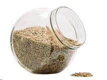 Зерно Rye отпадает Стоковое Изображение RF