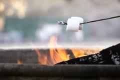 Зефиры жарки на пляже стоковое фото