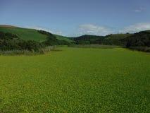 зеленая лагуна стоковая фотография