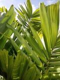 зеленая ладонь выходит backgrpund Стоковые Фотографии RF