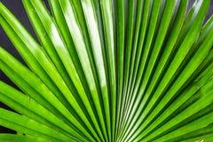 зеленая ладонь разрешения Стоковые Фотографии RF