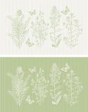 Зеленая бабочка флоры весны Стоковое фото RF