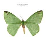 Зеленая бабочка Стоковое фото RF