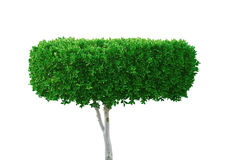 зеленая белизна вала Стоковое фото RF