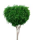 зеленая белизна вала Стоковые Изображения RF