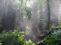 Зеленая вегетация с туманом стоковые фотографии rf