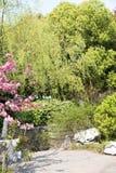 Зеленая верба и красные цветки Стоковое Изображение