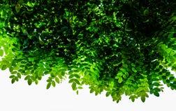 Зеленая верхняя часть листьев против солнечного неба Стоковая Фотография